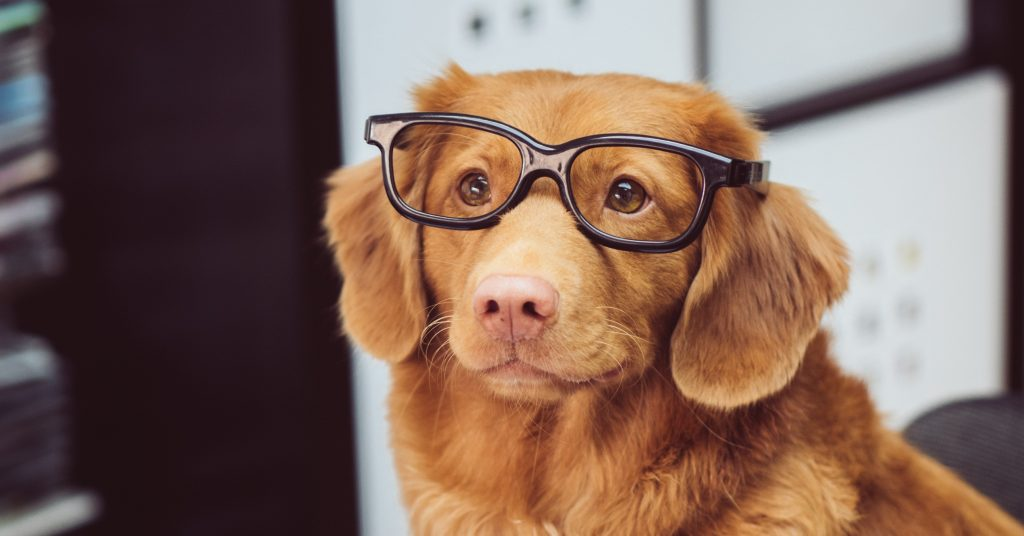 Pet dog with glasses reading a magazine